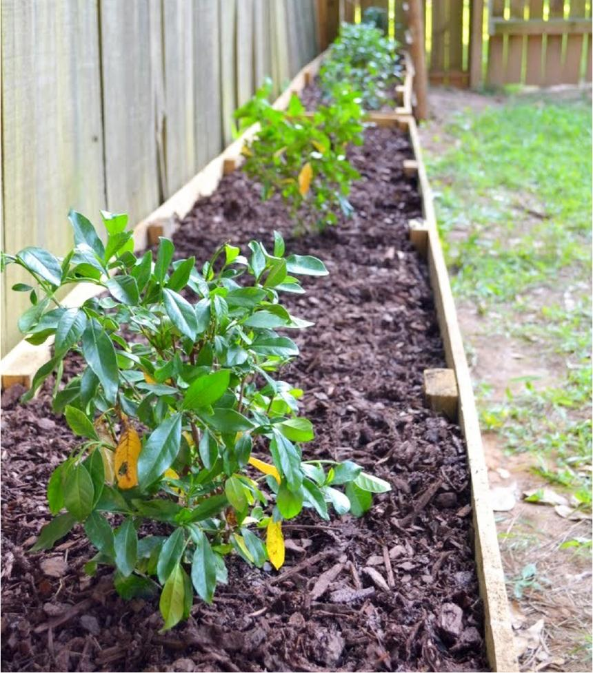 A garden bed against a fence with brown mulch and plants