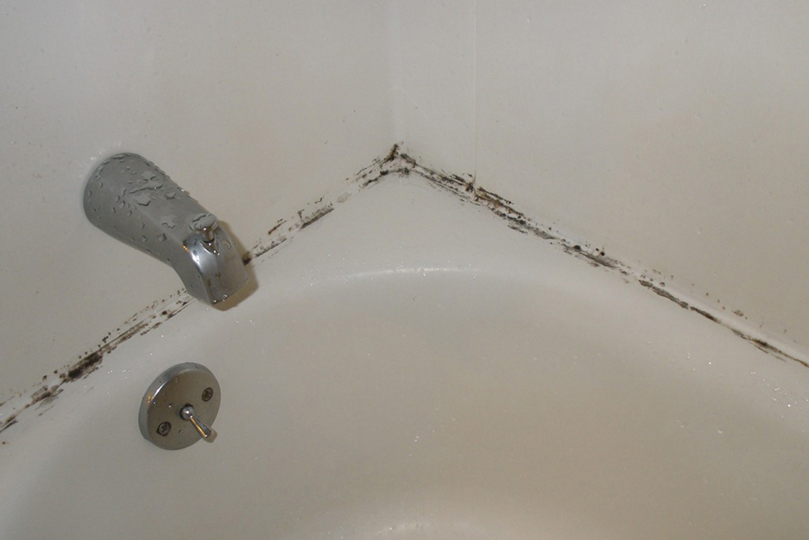 Bathroom Mold How To Kill Bathroom Mold Mold On Bathroom Ceiling - Best thing to clean bathtub