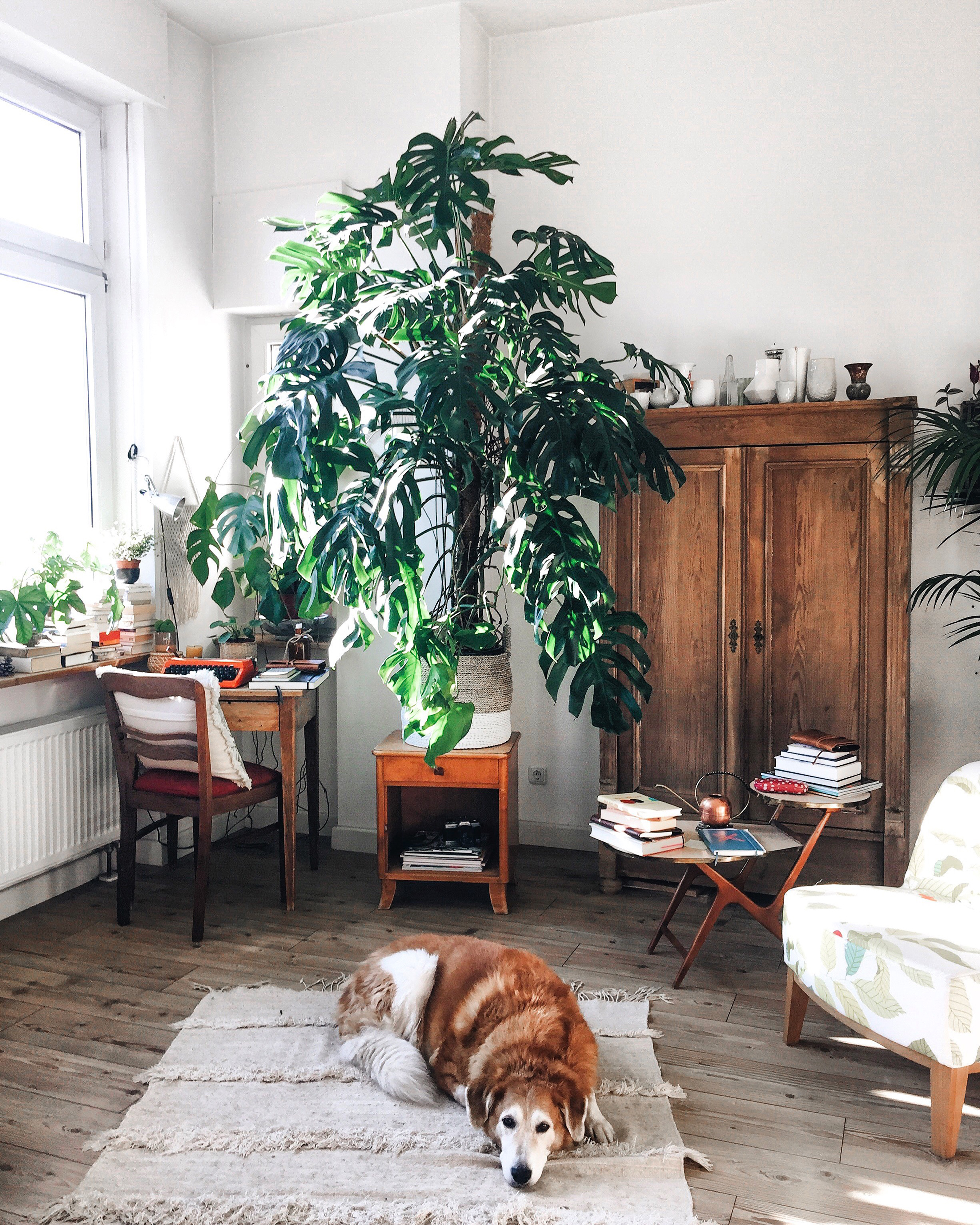 Houseplants and dog in a white room