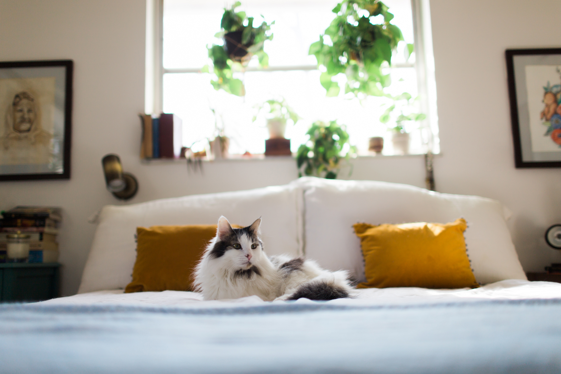 Cat lounging on a new mattress