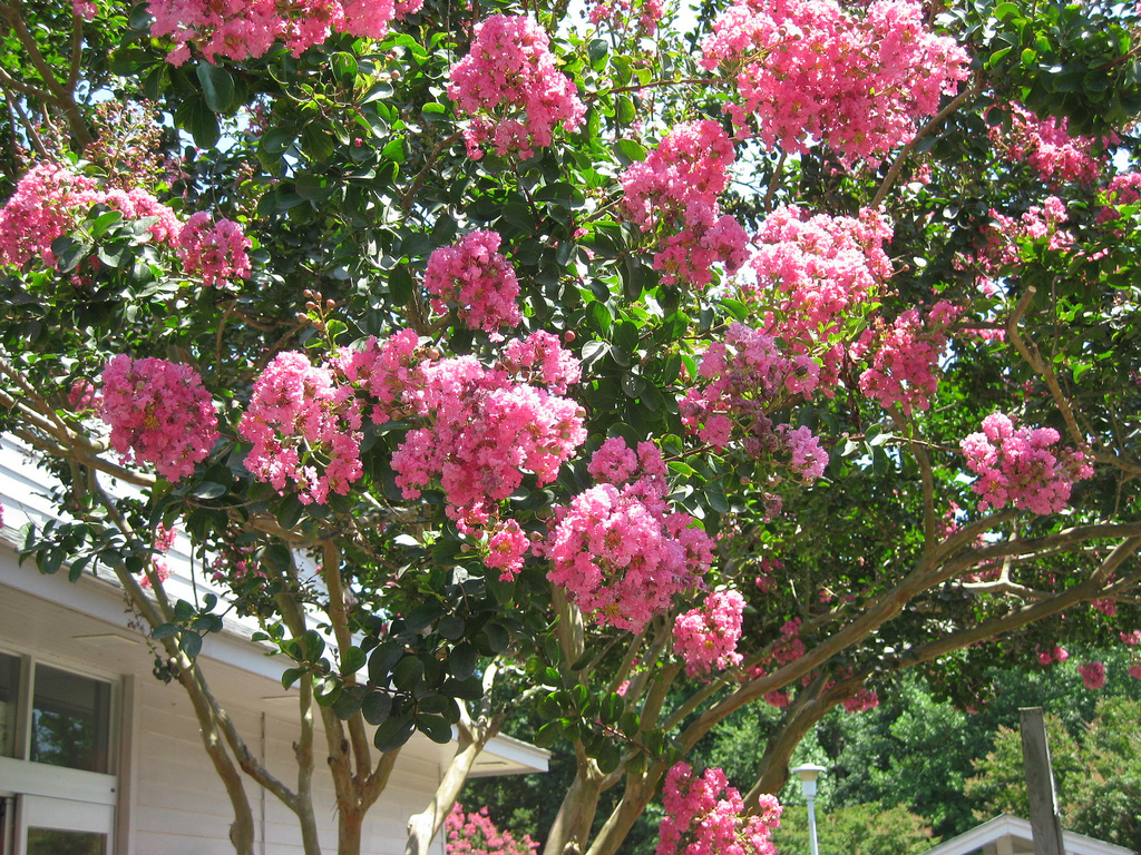 Best Trees To Plant For Landscaping Houselogic Yard Tips
