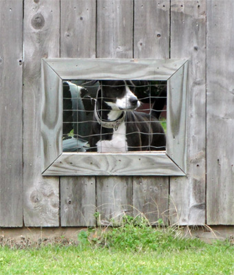 Window for Dogs in a Fence | Building a Dog Run