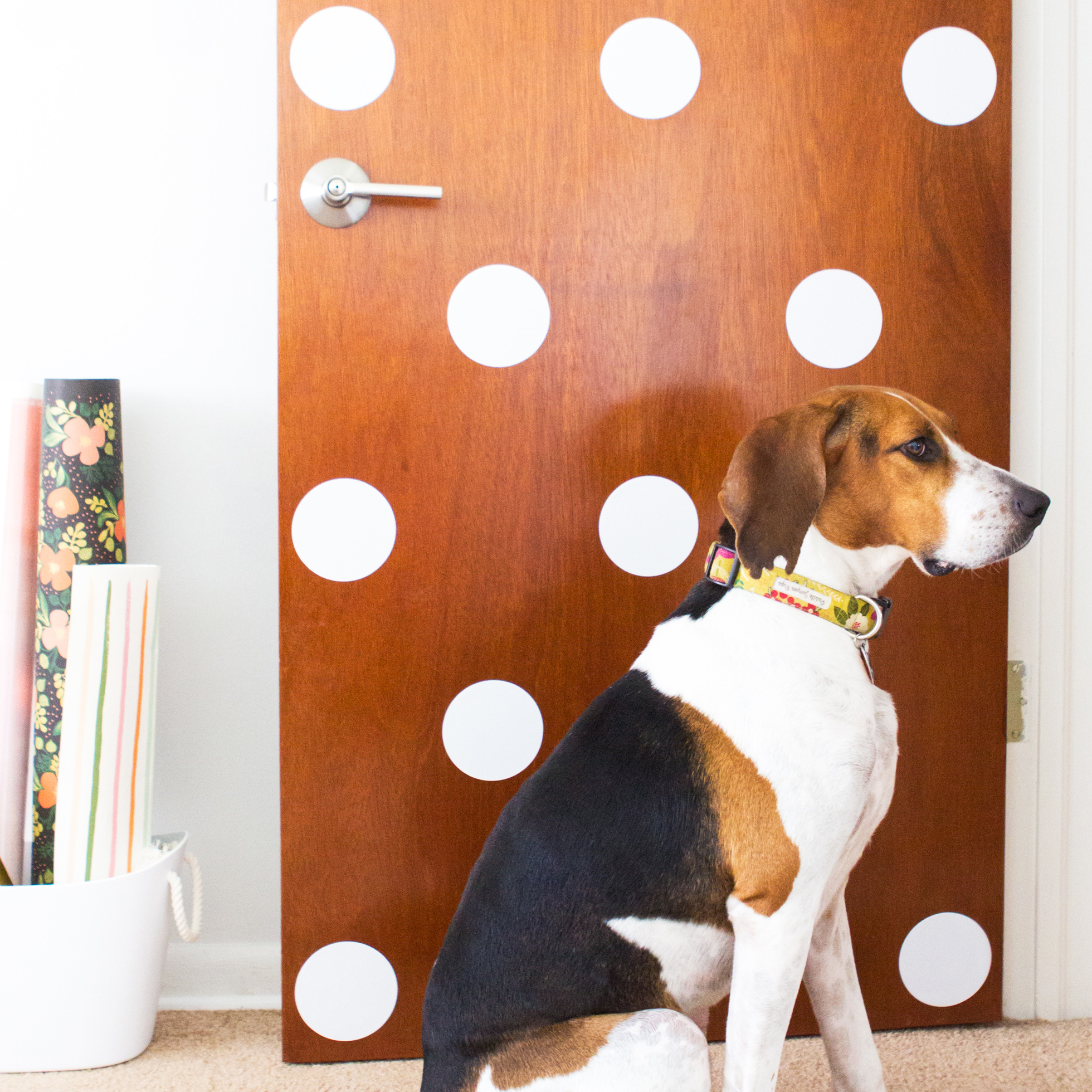 White polka dot decals on a wood door