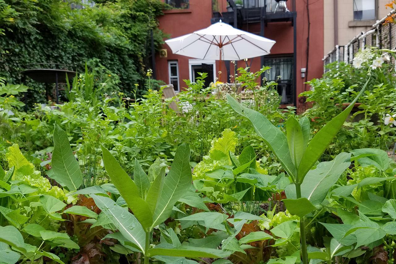 Weeds In Vegetable Garden Part - 22: HouseLogic