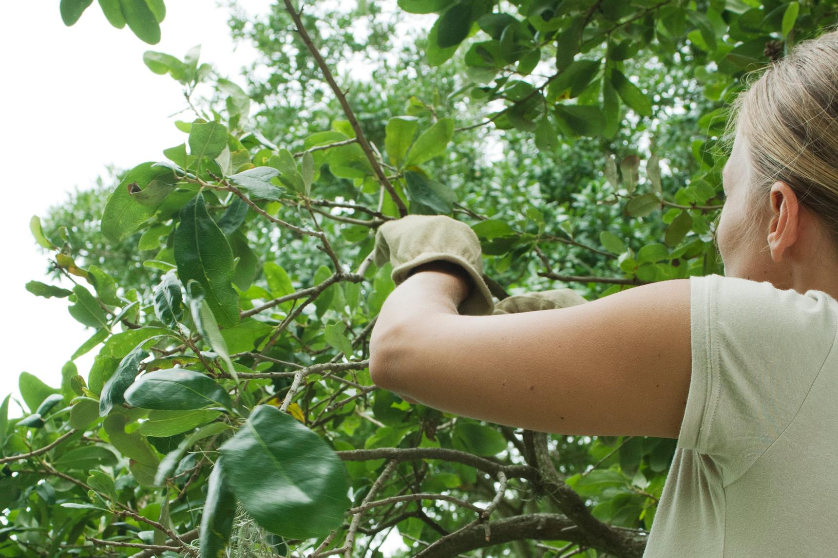 A woman with a green short-sleeved T-shirt trimming branches