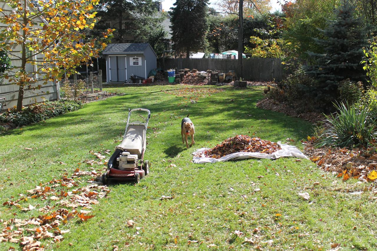 First Time Home Buyer Lawn Care