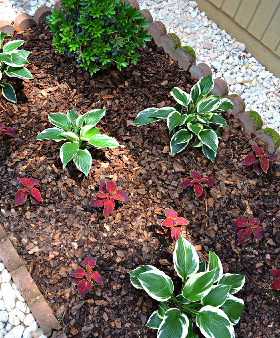 Gravel surrounding a mulched plant bed
