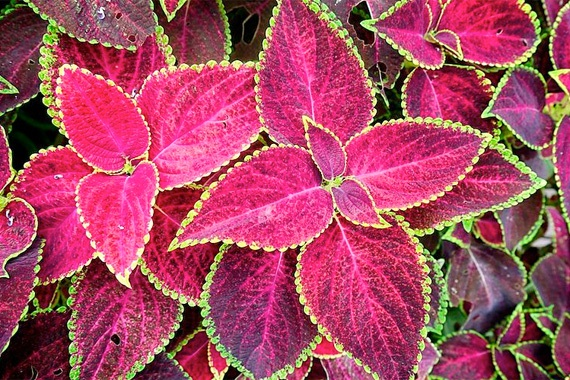 Image gallery colorful plants - Colorful indoor plants ...