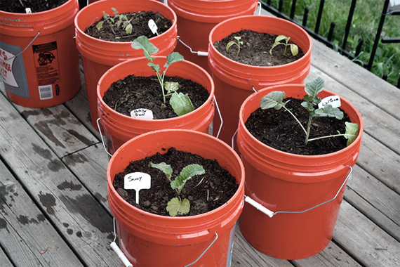 Container Growing Vegetables Tips for container gardening container gardening vegetables workwithnaturefo