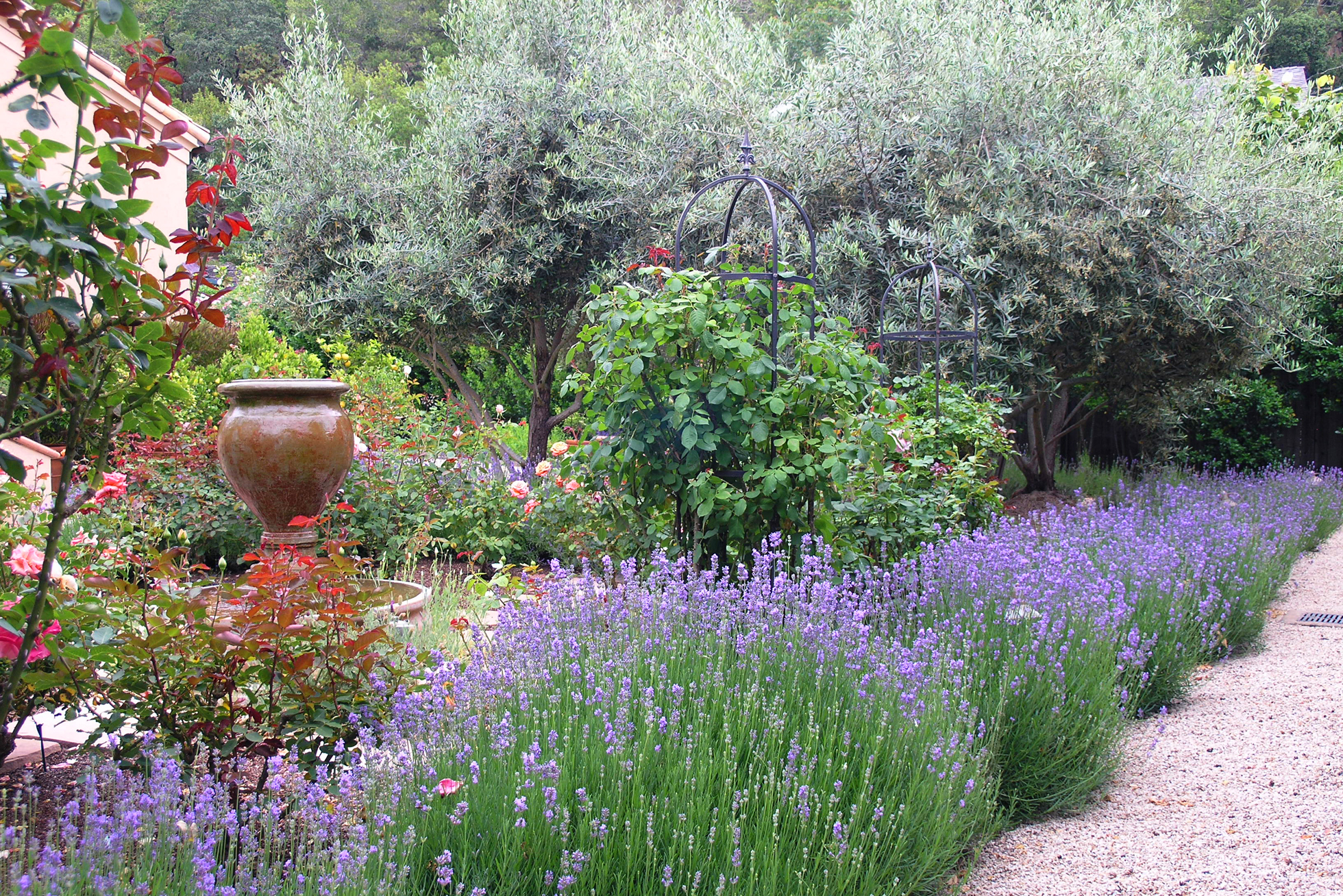 French style yard with lavender and gravel
