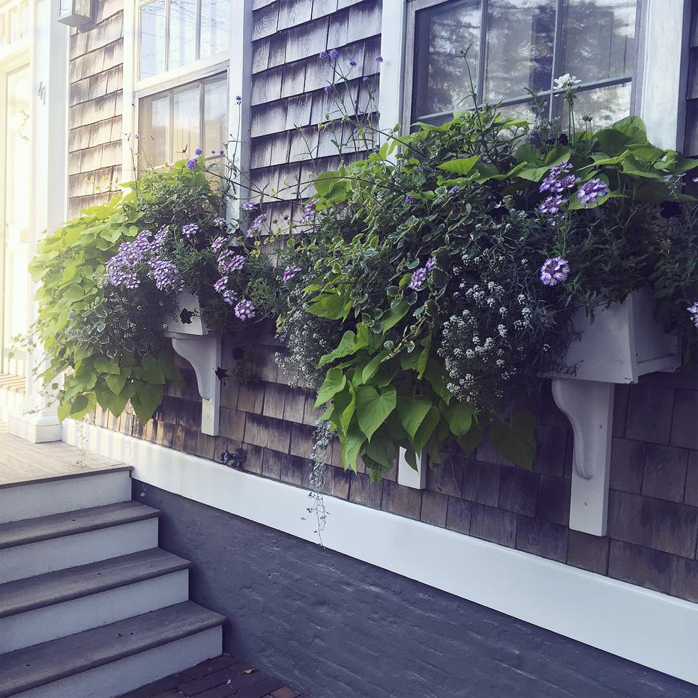 Front yard window boxes