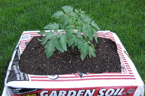 Would you garden in a bag for Garden topsoil