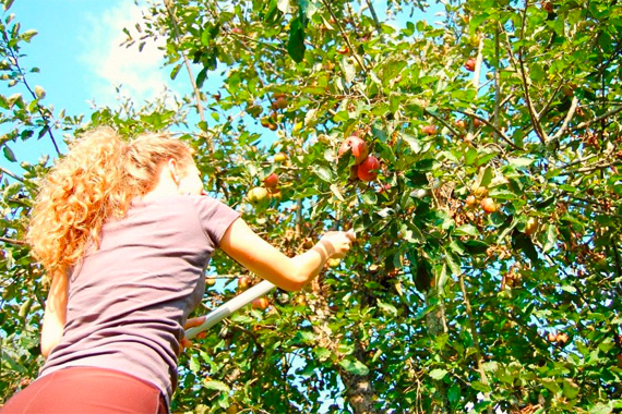 Home Fruit Tree Tips Plant Home Fruit Trees For Savings