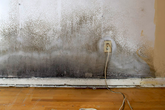 Is Mold In Bathroom Bad home insurance and mold | does homeowner insurance cover moldy house?
