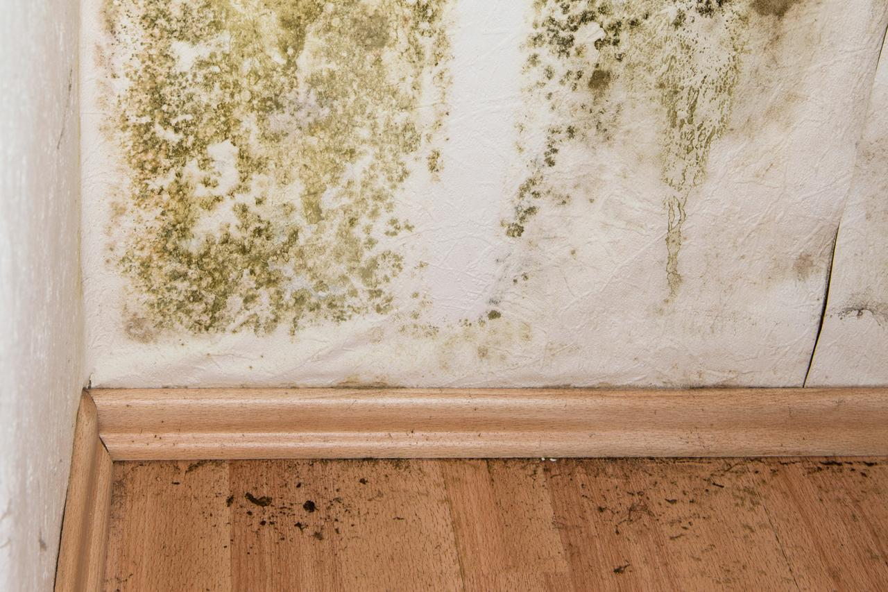 Mold Remediation Cost Eliminating Mold In Household