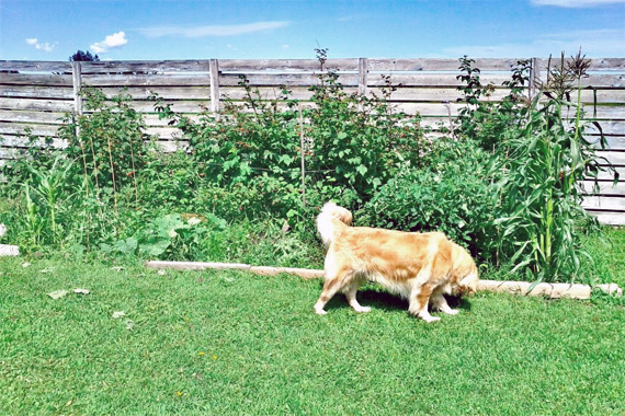 How To Keep Dogs Out Of Garden  Gardening Tips & Advice