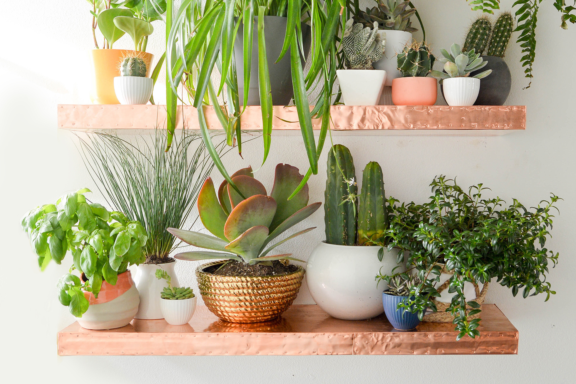 Live green plants on wooden floating shelves