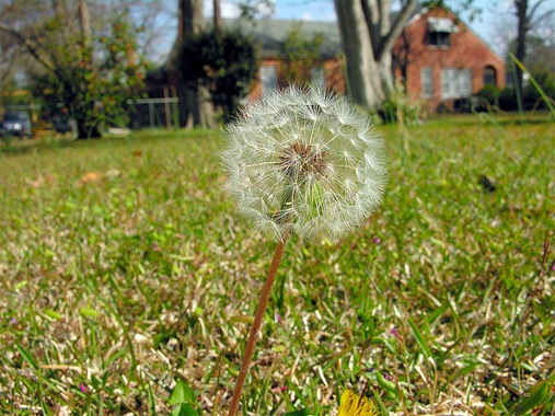 Should We Get Rid Of Our Lawns