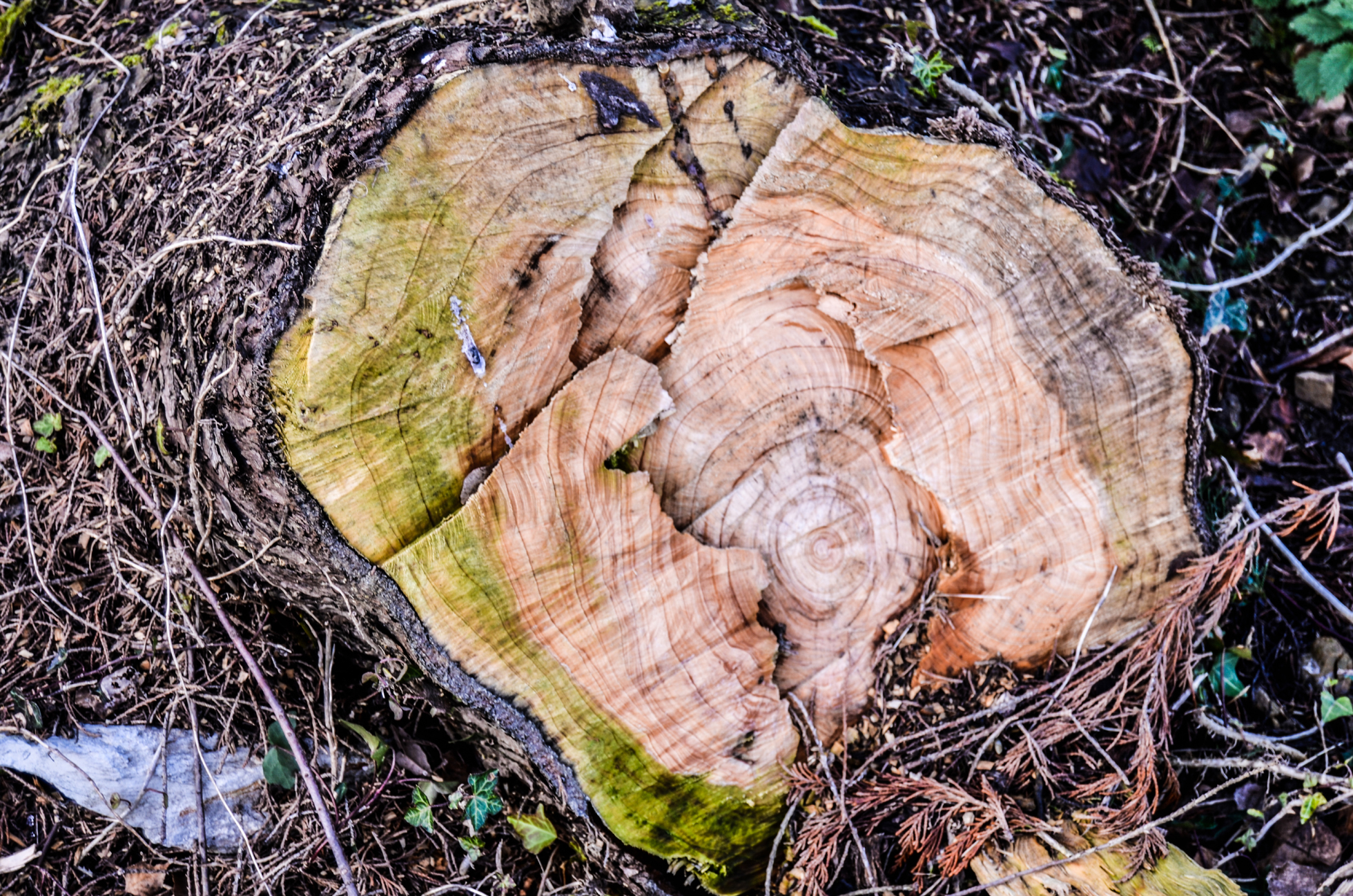 Tree stump in a yard