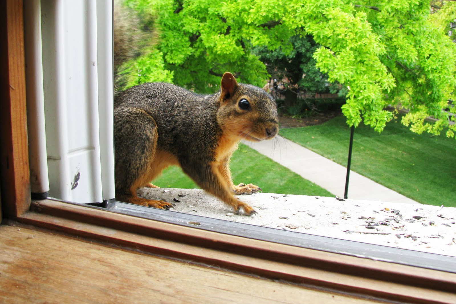Image result for squirrel in house