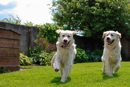 Landscaping for Dogs | HouseLogic Dog-Friendly Landscaping