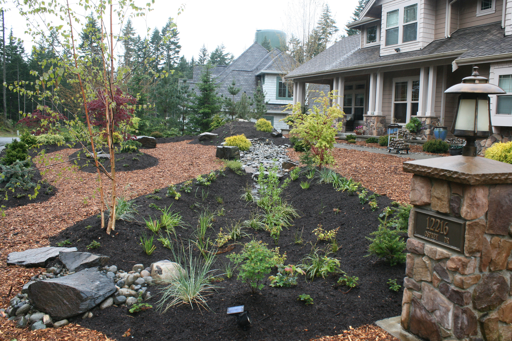 Lush rain garden in front yard with brown mulch, plants