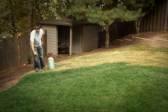 Lawn Paint Keeps Grass Green Lawn Spraying Tips