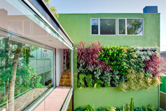 The Incredible and Sometimes Edible Living Wall