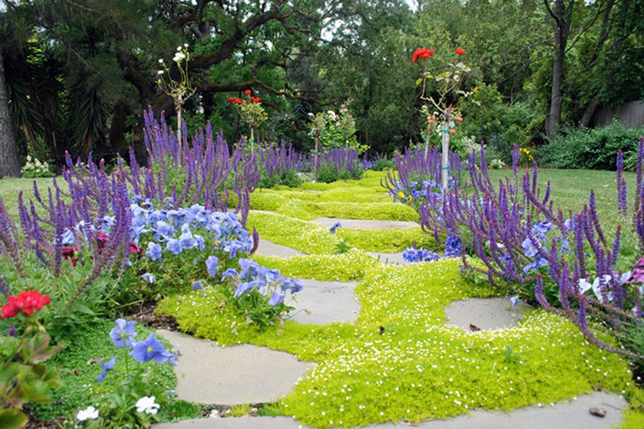 low maintenance ground cover  ground cover alternatives  houselogic, Natural flower