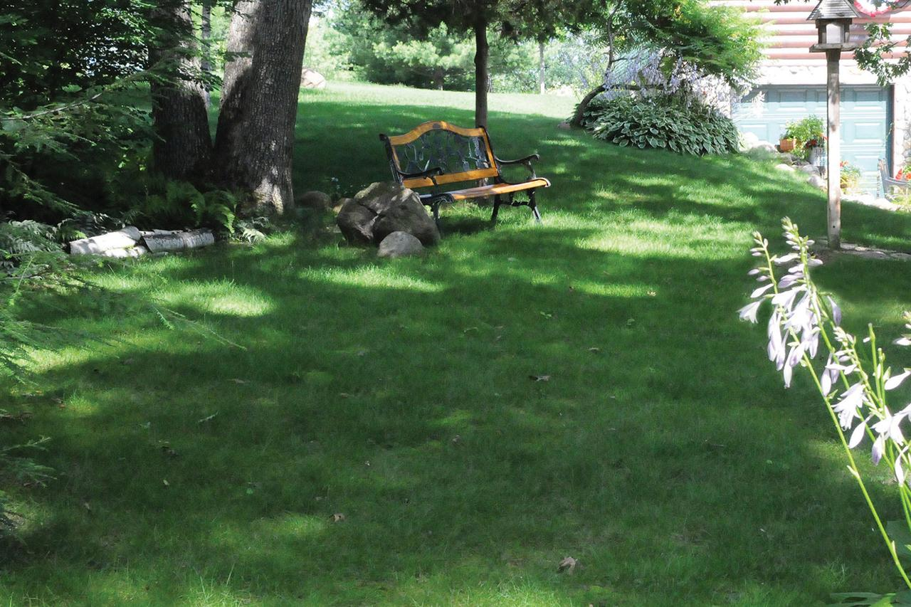 Yes, You Can Have a Lawn You Don't Have to Mow