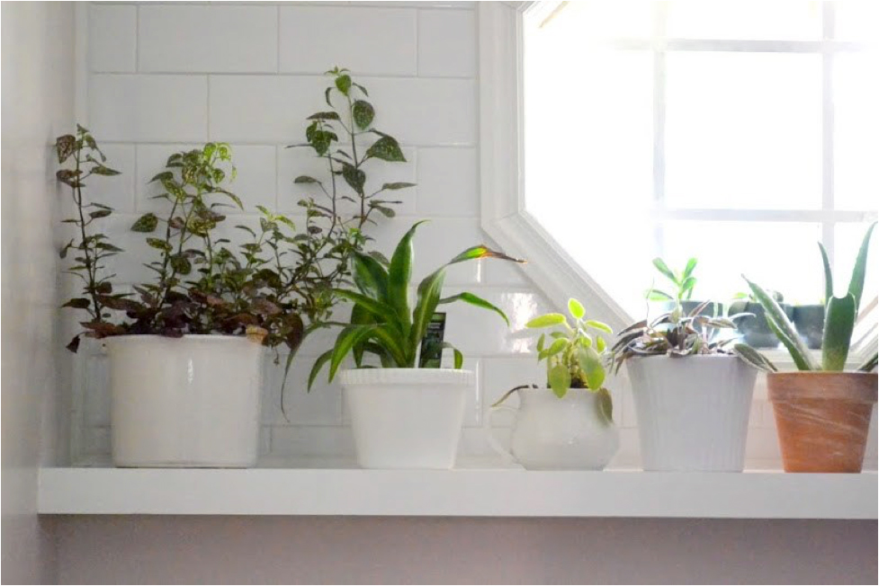 White room with plants on floating shelves