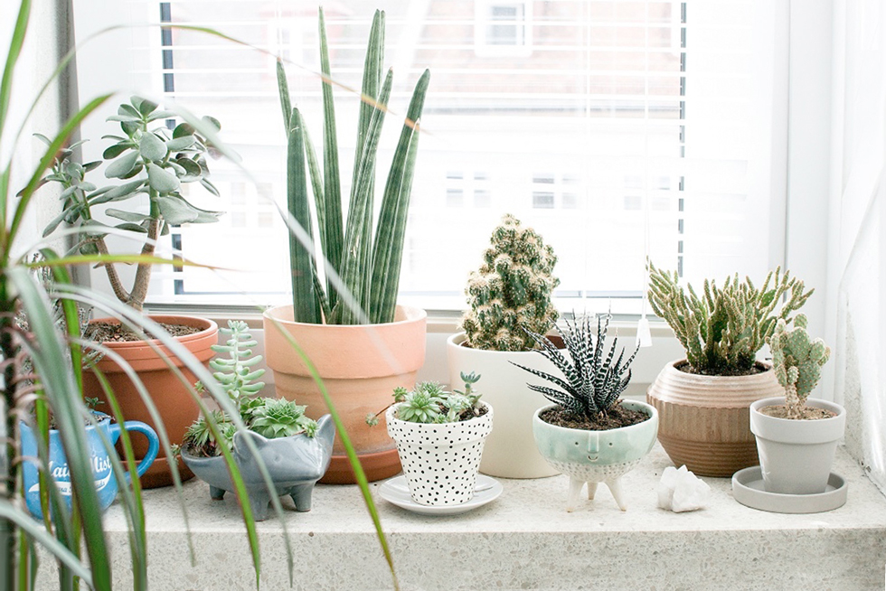 Plants on a home windowsill