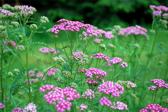 perennial flowers  landscaping  gardening tips  houselogic, Beautiful flower