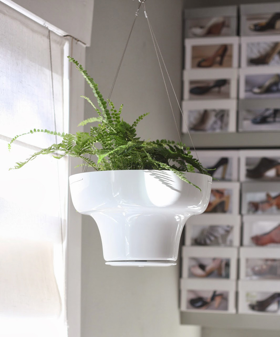 Hanging fern inside a home