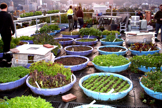 How To Build A Rooftop Community Garden Rooftop
