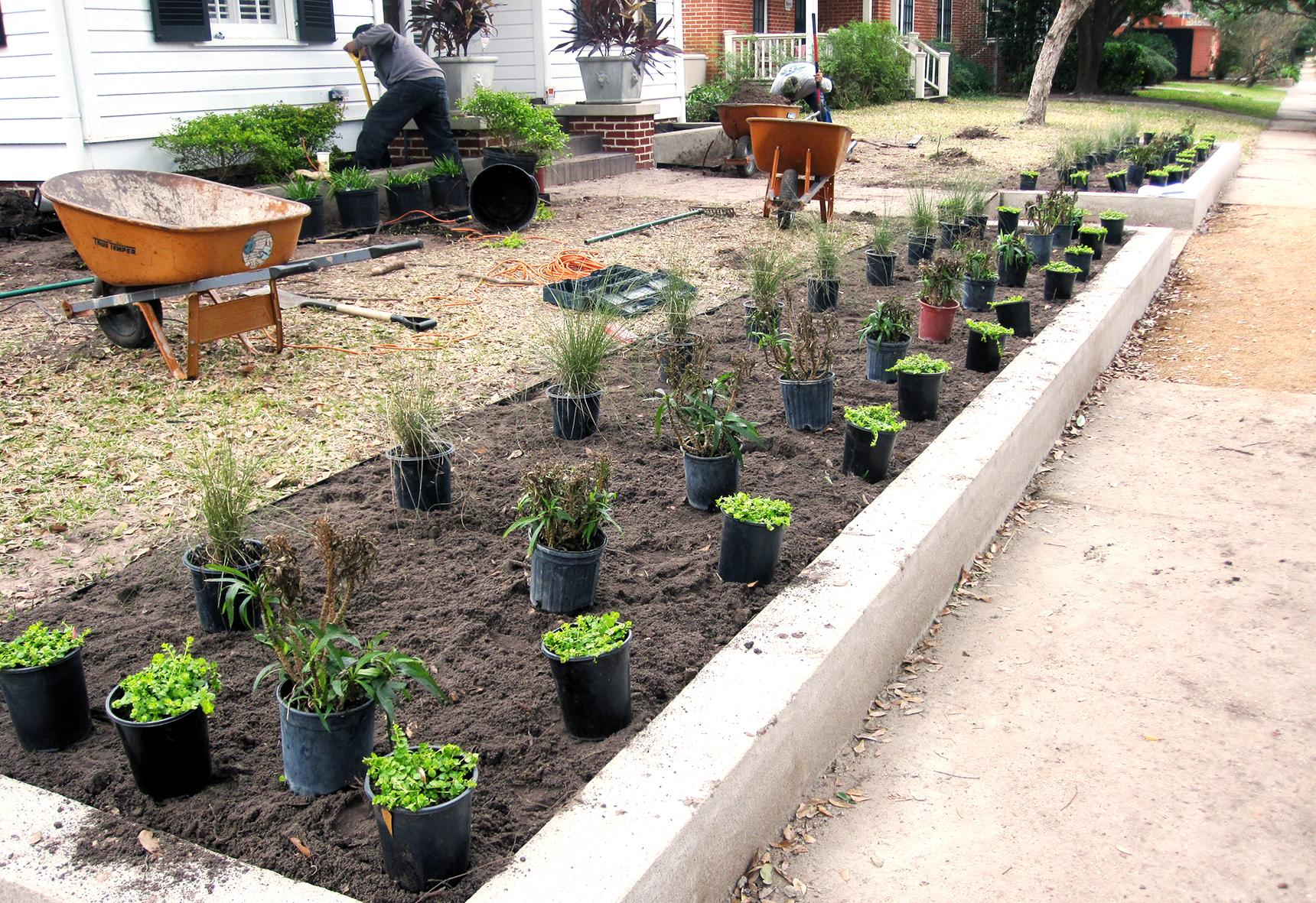 Landscapers planting in a front yard