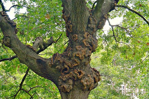 Sick Tree Treatment Landscape Trees And Shrubs Houselogic