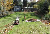 Dog hanging out during fall lawn cleanup