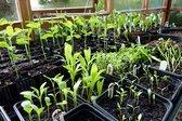 Many seedlings