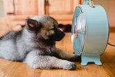 Dog sitting in front of fan keeping cool