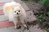 Dog playing in the dirt of the garden