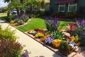 A drought tolerant landscape rich with colorful flowers