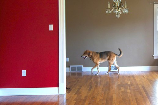 Dog walking in a home