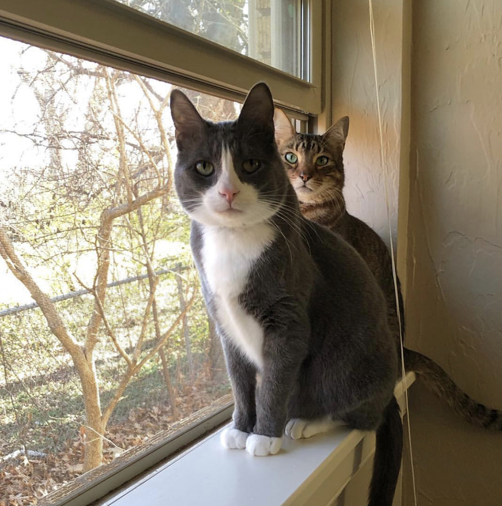 Two cats sitting on window sill of open window