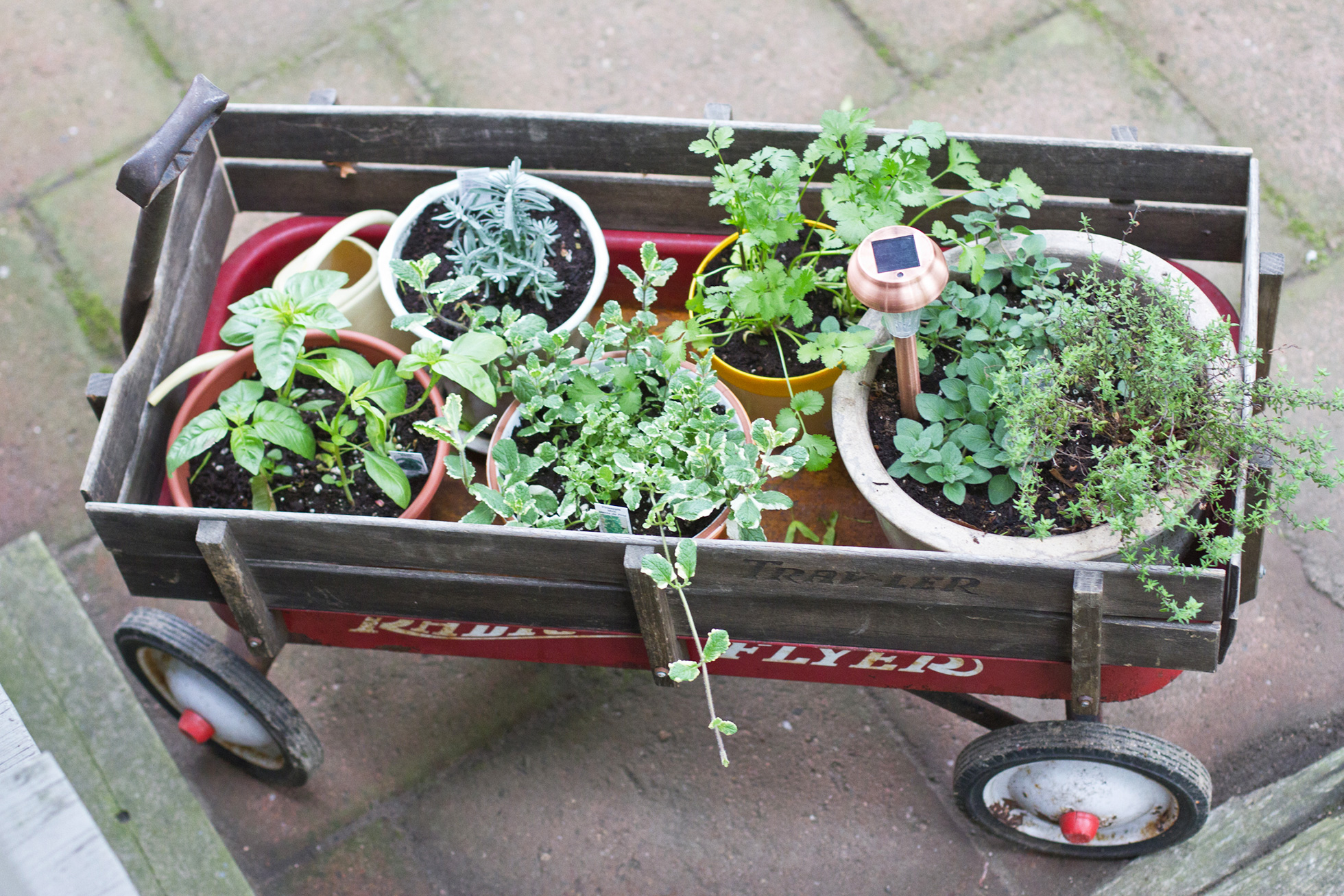 A red wagon filled with herbs