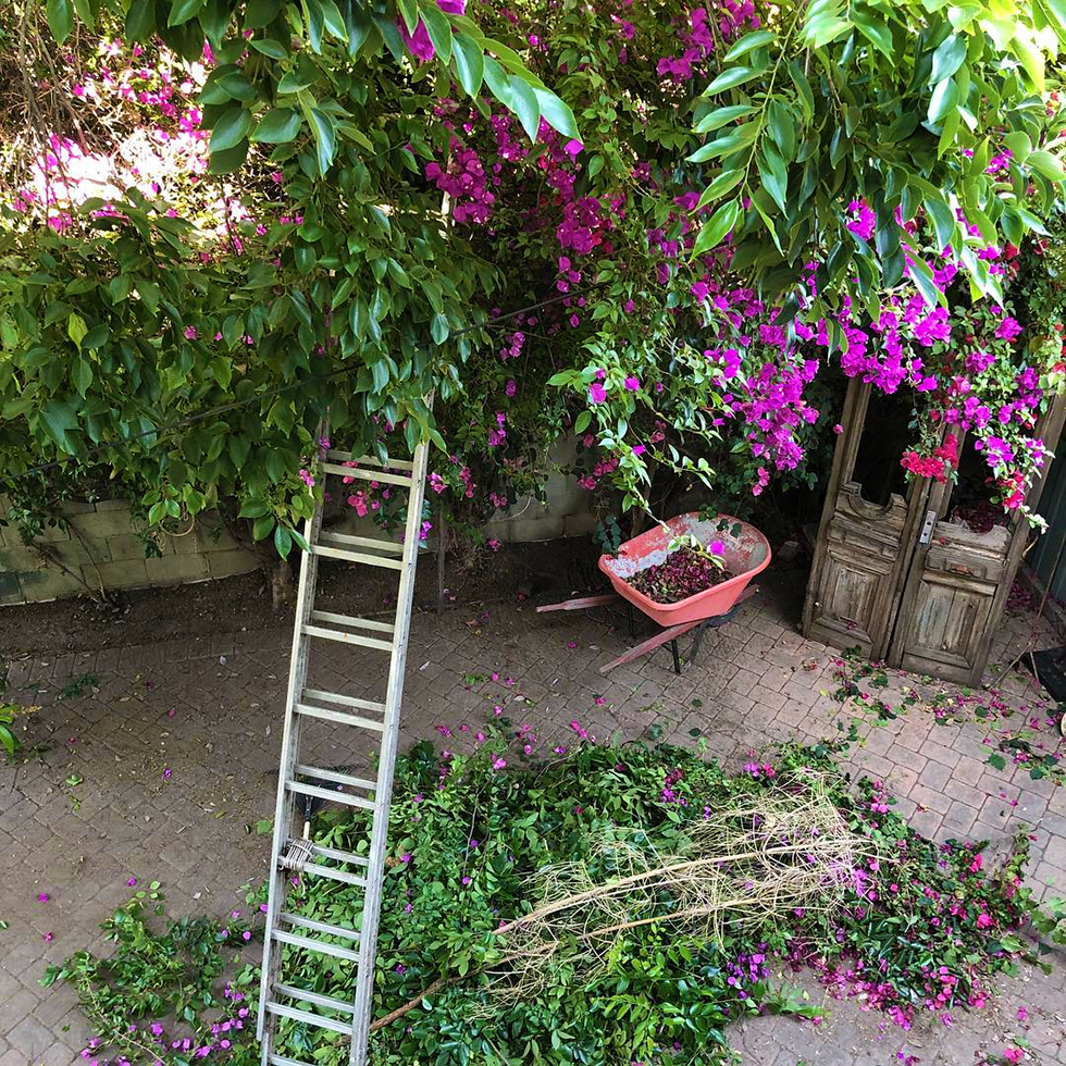 Overhead view of wheelbarrow and ladder beneath trees