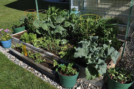 9 Reasons You Should Try Square Foot Gardening