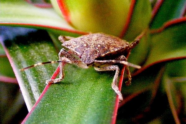 Stink Bugs Return How To Prepare Your Home Against An