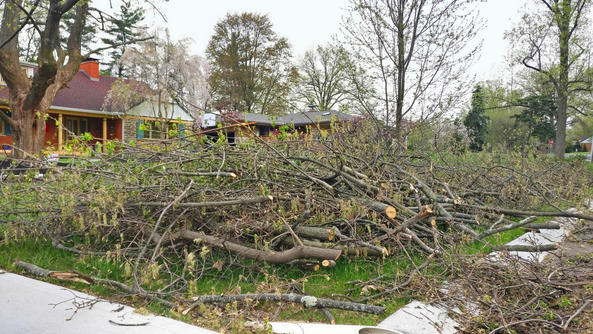 Pruned and damaged branches piled next to the street