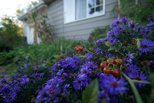 Grow Veggies in Your Flower Garden? Absolutely!